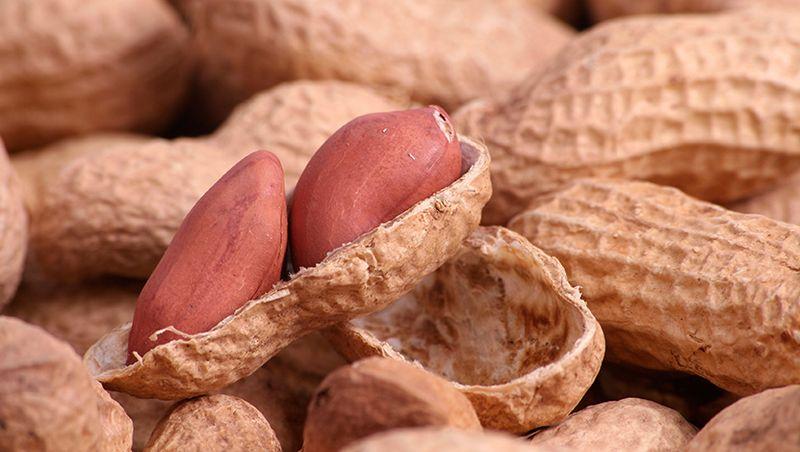 Польза арахиса для здоровья человека и его вредные свойства